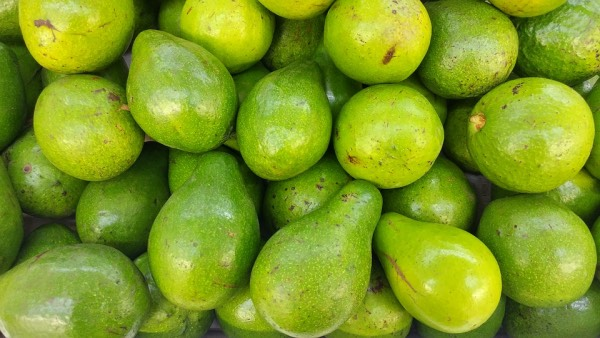 Avocado is a fruit that contains vitamins and minerals for the baby.